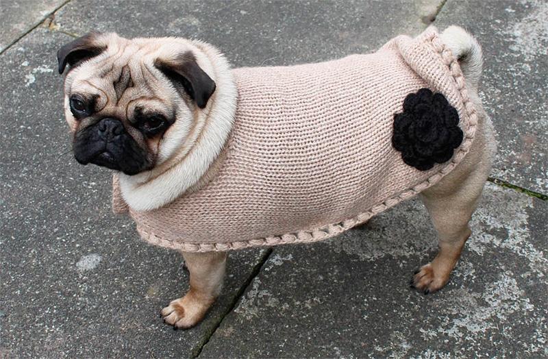 одежда для животных из альпаки